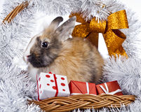 Christmas rabbit. With a christmas decorations and gifts Royalty Free Stock Image