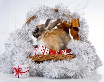 Christmas rabbit. With a christmas decorations and gifts Stock Images