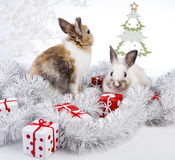 Christmas rabbit. With a christmas decorations and gifts Royalty Free Stock Photos