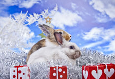Christmas rabbit. With a christmas decorations and gifts Stock Photography