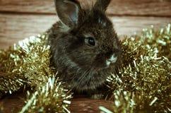 Christmas rabbit. Pet with christmas adorns Stock Images
