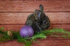 Christmas rabbit royalty free stock photo
