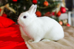 Christmas rabbit. Christmas White cute rabbit on a background of trees Royalty Free Stock Photo