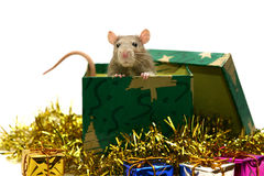 Christmas rat Stock Photos