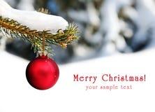 Christmas red ball Stock Image