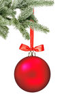 Christmas red ball and christmas tree branch isolated over white Royalty Free Stock Image
