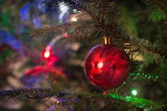 Christmas red ball on christmas tree. Close up. Royalty Free Stock Photography