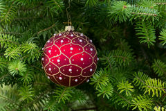 Christmas red  ball on the Christmas tree. Royalty Free Stock Images