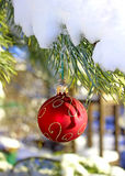 Christmas red ball on fir-tree branch Royalty Free Stock Images