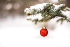 Christmas red ball hanging on fir-tree outdoor. stock photo
