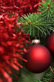 Christmas Red Ball On Tree Stock Photo