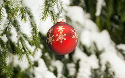 Christmas red ball in winter forest Stock Photography