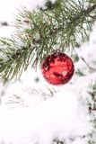 Christmas red balls on pine tree branch covered with snow. Stock Image