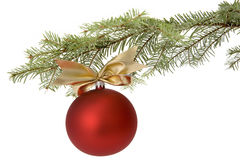 Christmas red bauble on tree branch. Christmas red bauble with ornamental ribbon (bow) hanging on Common Fir (Abies alba) twig on white background Royalty Free Stock Photos