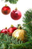 Christmas red bubbles and Spruce Tree Royalty Free Stock Images
