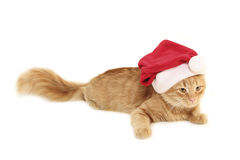 Christmas red cat Royalty Free Stock Images