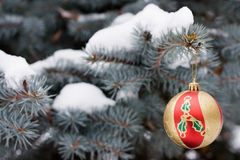 Christmas red decoration. On tree in park royalty free stock images
