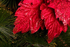 Christmas red flower Stock Images
