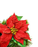 Christmas red flower decoration. Christmas red flower and evergreen decoration. Isolated over white background royalty free stock images