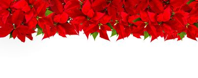 Christmas red flower poinsettia border white background. Christmas red flower poinsettia border on white background royalty free stock image