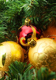 Christmas red and godlen baubles and Spruce Tree Royalty Free Stock Photography