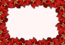 Christmas red leaves and White background Royalty Free Stock Image