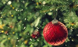 Christmas red luxury ball on tree branches in snowy atmosphere stock photos