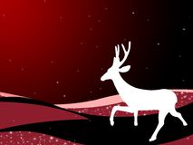 Christmas reindeer. White reindeer in Christmas settings Royalty Free Stock Photos
