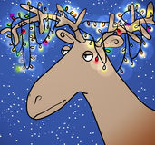 Christmas reindeer Royalty Free Stock Images