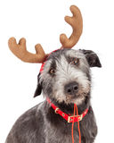 Christmas Reindeer Dog Closeup Royalty Free Stock Photography