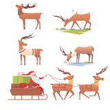 Christmas reindeer holiday mammal deer xmas celebration cute decoration winter art new year wildlife animal and santa Royalty Free Stock Photos