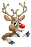 Christmas Reindeer Stock Photos