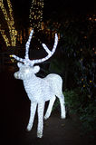 Reindeer, light,christmas. Reindeer light on background with blurry mini lights Royalty Free Stock Photo