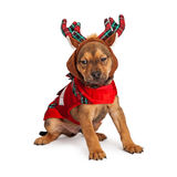 Christmas Reindeer Puppy Royalty Free Stock Image