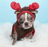Christmas Reindeer Puppy Stock Photos