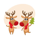 Christmas reindeer in red scarf, cartoon vector illustration. Two Christmas reindeer with a red scarf and green fir tree, cartoon vector illustration isolated Royalty Free Stock Photo
