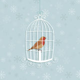 Christmas robin Stock Photo