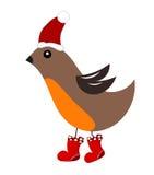 Christmas robin bird Royalty Free Stock Image