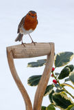 Christmas Robin with Holly Stock Images