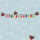 Christmas robins Stock Image
