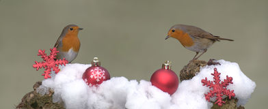 Christmas Robins. Robins in the snow with Christmas tree balls Stock Photography