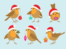 Christmas Robins Royalty Free Stock Photography