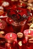 Christmas rose Royalty Free Stock Photos