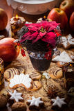 Christmas rose with cookies Royalty Free Stock Photos