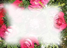 Christmas roses background. For letters Stock Photo