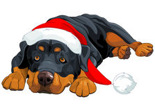 Christmas Rottweiler Stock Photos
