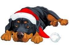 Christmas Rottweiler Stock Photos