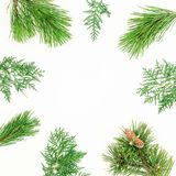 Christmas round frame made of winter tree branches on white background. Festive background. Flat lay, top view. Christmas round frame made of winter tree royalty free stock photo