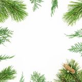 Christmas round frame of winter tree branches on white background. Festive winter background. Flat lay, top view. Christmas round frame of winter tree branches royalty free stock photos