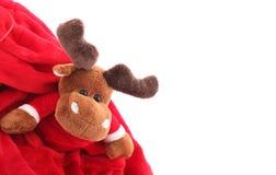Christmas Rudolph Royalty Free Stock Photos